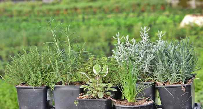 hierbas para dar sabor a la comida