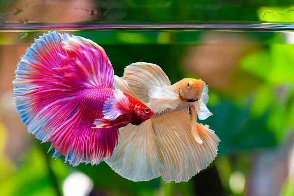 acuario amazonico
