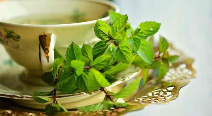 hierbas para controlar la acidez del cuerpo