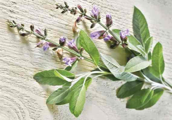 hierbas para mujeres con menopausia