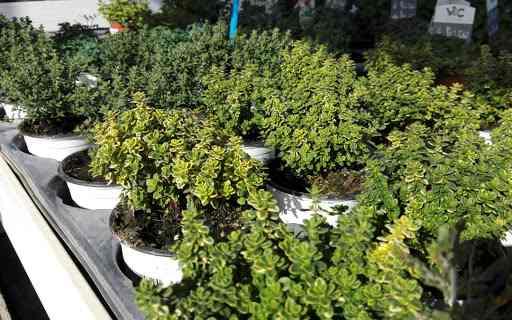 tipos de plantas ecologicas